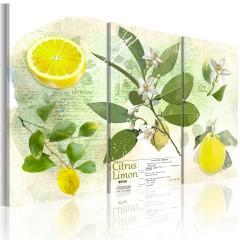 Artgeist Wandbild - Fruit: lemon