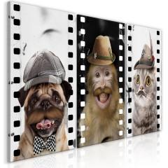 Artgeist Wandbild - Funny Pets (Collection)