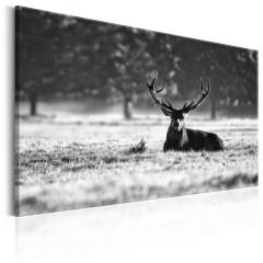 Artgeist Wandbild - Lying Deer