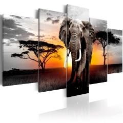 Artgeist Wandbild - Elephant at Sunset