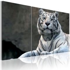 Artgeist Wandbild - Stolzer Tiger