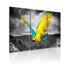 Artgeist Wandbild - Paradiesvogel - Triptychon