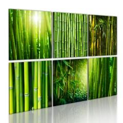 Artgeist Wandbild - Bambus hat viele Gesichter
